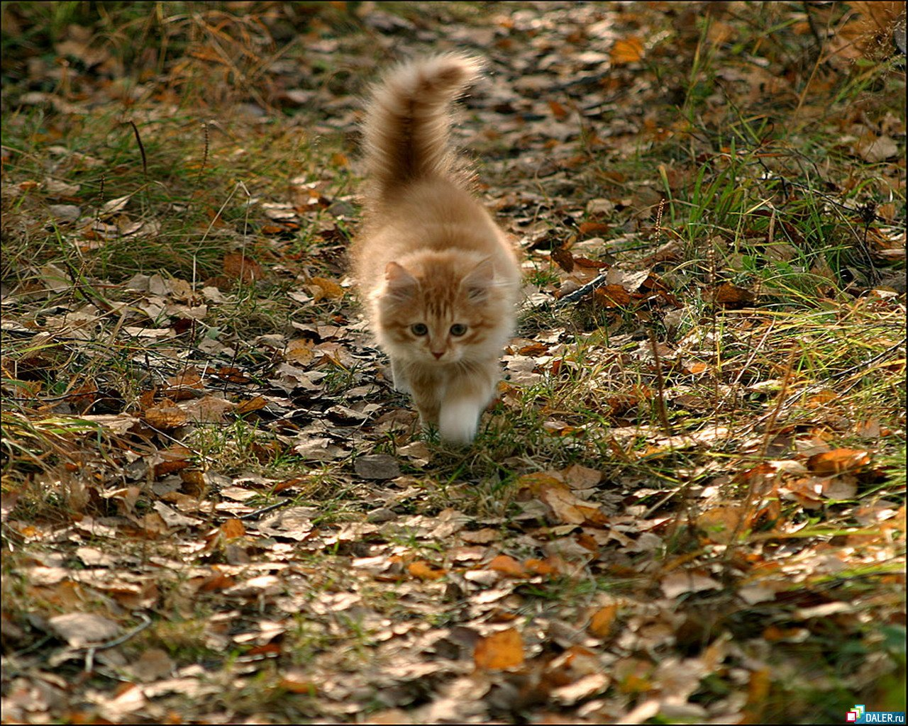 Котэ / прикольные картинки с кошками листья / Смешные картинки
